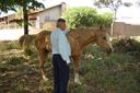 Animais soltos pelas ruas preocupam Cido Verdureiro