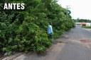 Cidimar Porto retorna ao bairro José Cury e constata poda das árvores